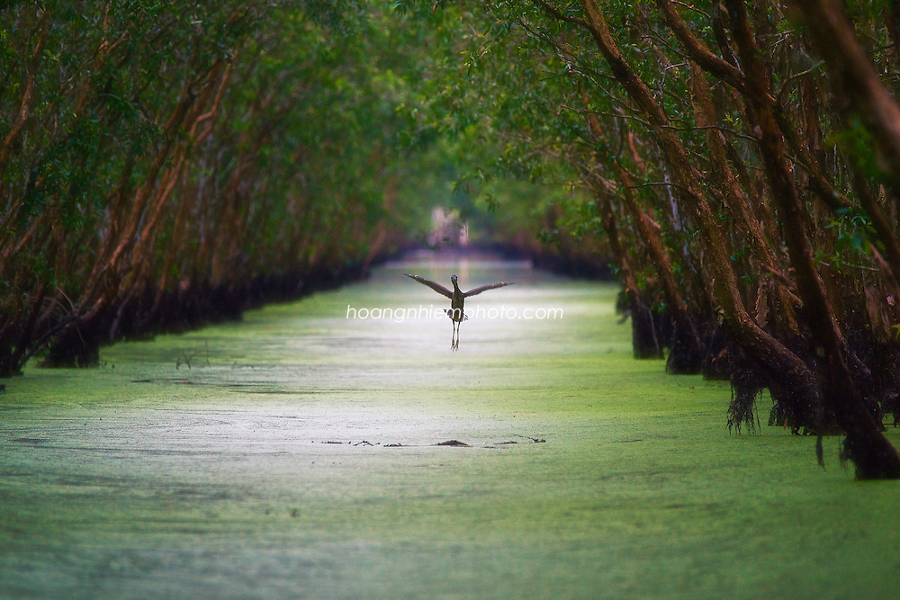 Vietnam Images-Nature-Mekong delta. hoàng thế nhiệm