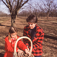 Rebecca and Mary Lewis gathering pecans in a Rosedale orchard.