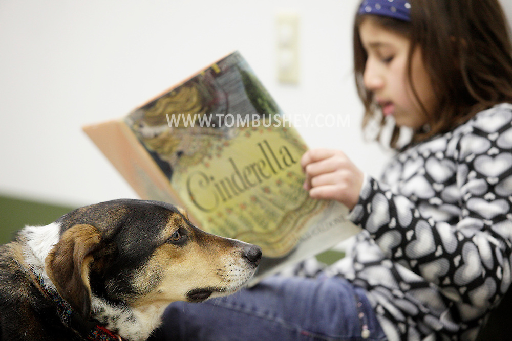 Reading Therapy Assistance Dog  Milo listens as Isabella Peralta, 8, reads Cinderella out loud during a FURacious reading program at Cornwall Library on Friday, Feb. 25, 2011.