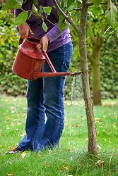 Watering Nemasys Grow Your Own  nematodes onto trunk of apple tree to protect from pests