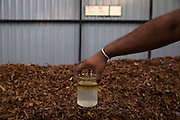 At the modern factory of P.T.C Agro an hour east of Colombo cinnamon flakes are distilled to produce extremely high quality cinnamon oil that they export abroad. The cinnamon oil can be seen floating on top of water after the distillation process os complete.