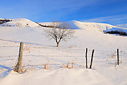 Fence, trees and snow<br /> Qu'Appelle Valley near Craven<br /> Saskatchewan<br /> Canada