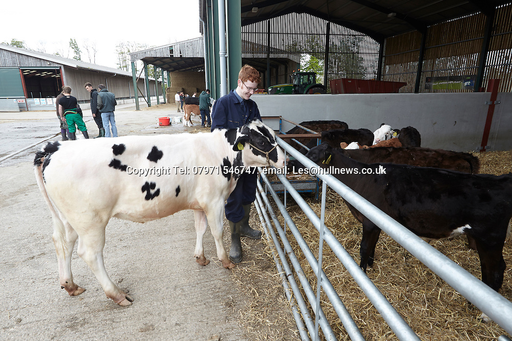 14th May 2016<br /> Bishop Burton College stockmanship day.