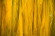 Reeds, Bronx Zoo, New York