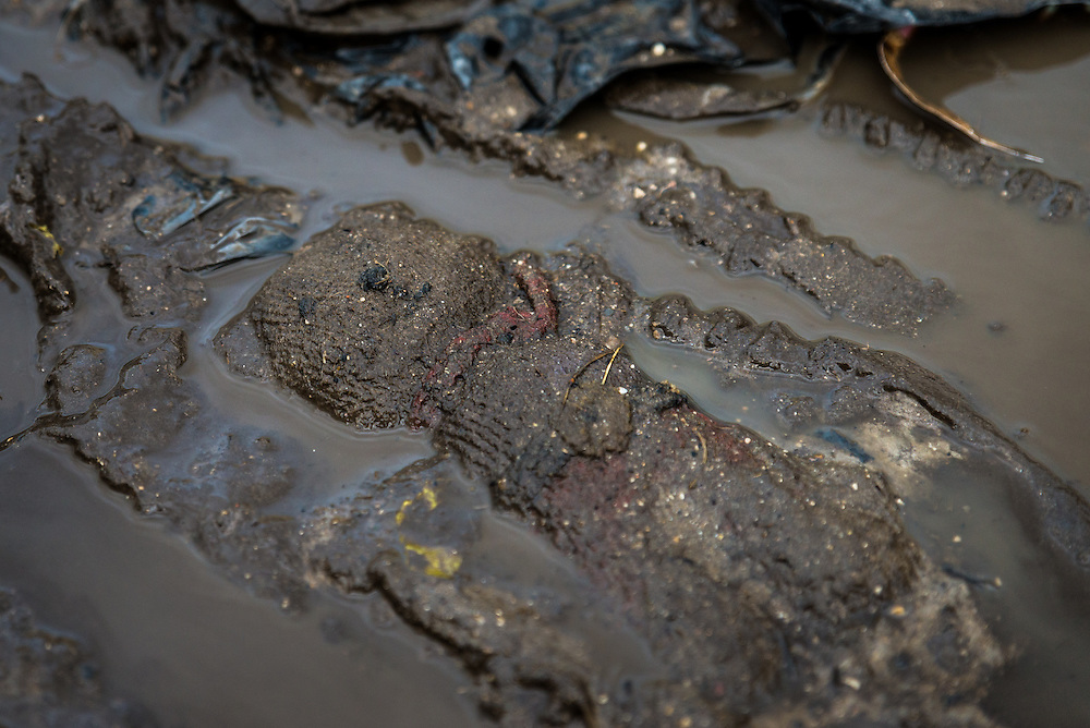 A child's soft toy lies in the mud in the Calais 'Jungle' refugee camp.