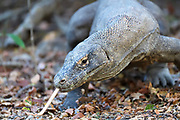 Images from Komodo National Park