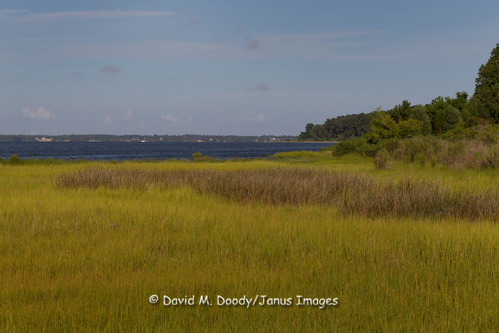 Tidal wetland grasses and the York River near Yorktown along the Colonial Parkway, Yorktown, Virginia.  the Chesapeake Bay Watershed