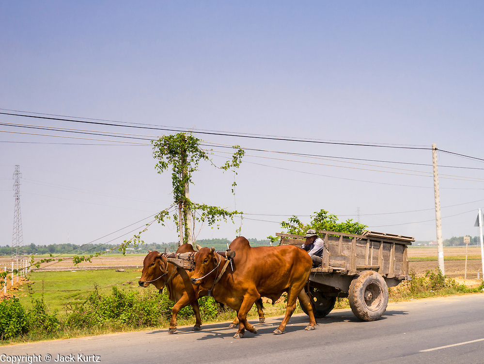 29 MARCH 2012 - TAY NINH, VIETNAM:   A man drives an oxcart along highway AH1 in Tay Ninh, Vietnam. Oxen are still used as beasts of burden in Vietnam.     PHOTO BY JACK KURTZ
