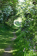 A perfect green tunnel - an optical illusion created by Sunlight on an open field at the end of a country lane overhung with arching hedgerow branches and lined with native wildflowers. Lagg, Isle of Arran.<br />
