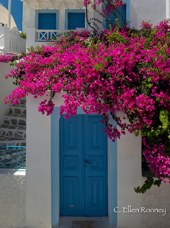Bougainvillea growing around a door in Oia, Santorini, The Cyclades, The Aegean, The Greek Islands, Greece, Europe