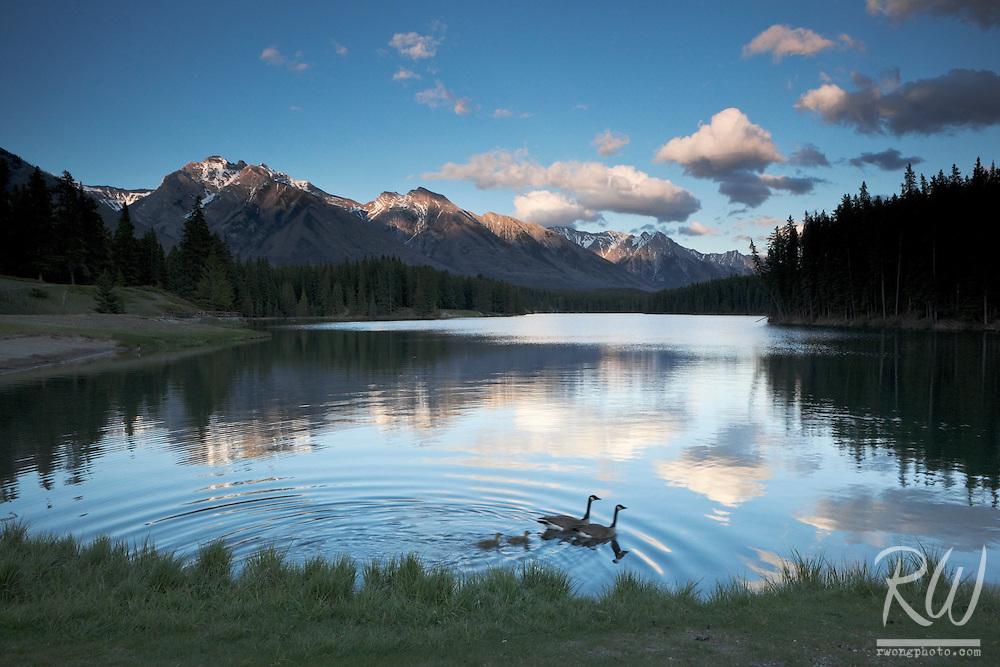 Canada Geese Family at Johnson Lake, Banff National Park, Alberta, Canada