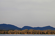 Landscape. Islands and Winterthorn trees as seen from the Zambezi river. Lower Zambezi National Park. Zambia. Africa.