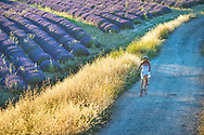 Europe, France, Provence, Valensole, girl in lavender field, MR 0566