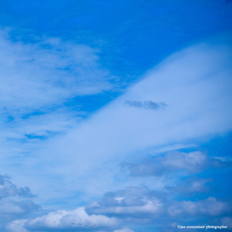 A flock of birds seen in the distance in a wide blue sky with summer clouds.