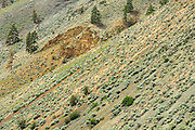 Arid landscape of the Interior<br /> near Kamloops<br /> British Columbia<br /> Canada
