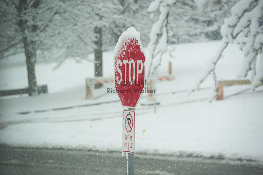 2017 FEBRUARY 06 - A stop sign covered in snow in a West Seattle neighborhood, Seattle, WA, USA. By Richard Walker