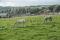 Two pale grey horses graze in a lush green pasture in rural France, near the village of Reviers, in hazy daylight. In the background is a fence, farm buildings, green deciduous trees and a grey-blue sky