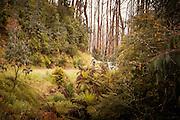 2014 Lake Mountain Bunch
