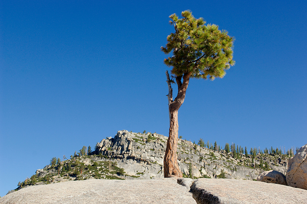 Olmsted Point along Tioga Pass Road, Yosemite National Park, California, United States of America