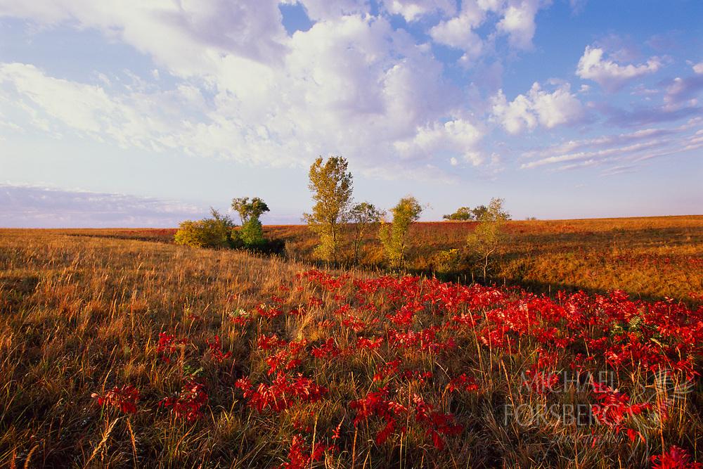 Sumac and prairie grass show their fall colors.  Audubon Spring Creek Prairie, Southeast Nebraska.