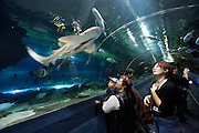 Oceanarium at entertainment center Duman. Watching sharks at the water tunnel.