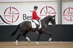 076, Pegasus vd Guldennagel, Thijs Stijn, BEL<br /> Hengstenkeuring BWP<br /> 3de phase - Hulsterlo - Meerdonk 2018<br /> © Hippo Foto - Dirk Caremans<br /> 15/03/2018