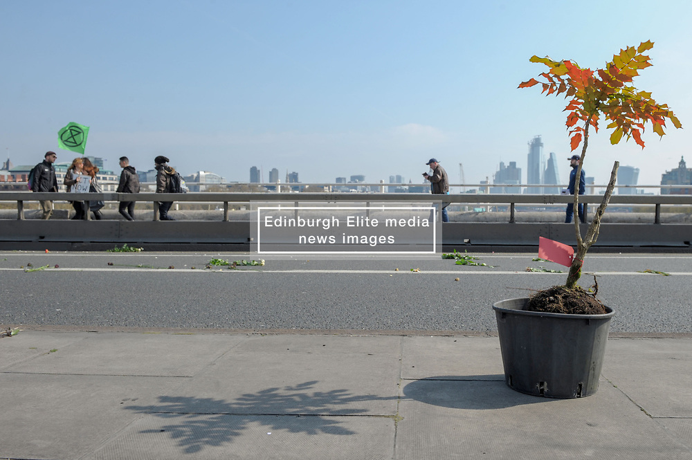 Members of Extinction Rebellion blocked Waterloo Bridge as part of the international rebellion where they will bring London to a standstill for up to two weeks. The group placed plants and trees along the bridge as it was closed to traffic.<br /> <br /> Richard Hancox | EEm 15042019