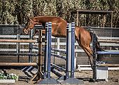 Horse No 47