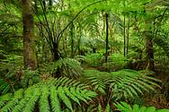 Oceania; New Zealand; Aotearoa; North Island; Kawerau; Tarawera; river; fern; nature; forest; stream; tropical
