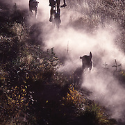 A picture of a woman mountain biking down a dusty single track trail with her dogs near Truckee, CA.