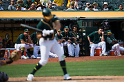 The Oakland Athletics watch gameplay against the Los Angeles Angels from the dugout at Oakland Coliseum in Oakland, California, on September 6, 2017. (Stan Olszewski/Special to S.F. Examiner)