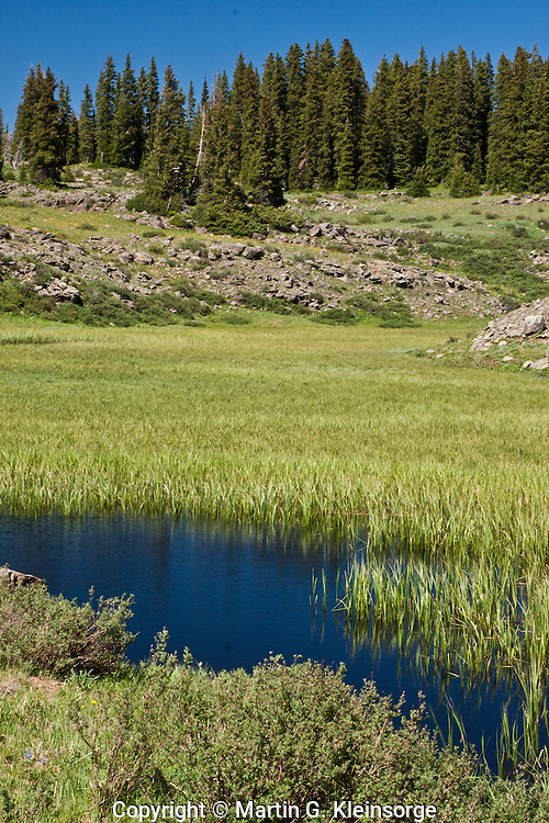 One of many small ponds found in marshy bog areas on the Grand Mesa,  Colorado.