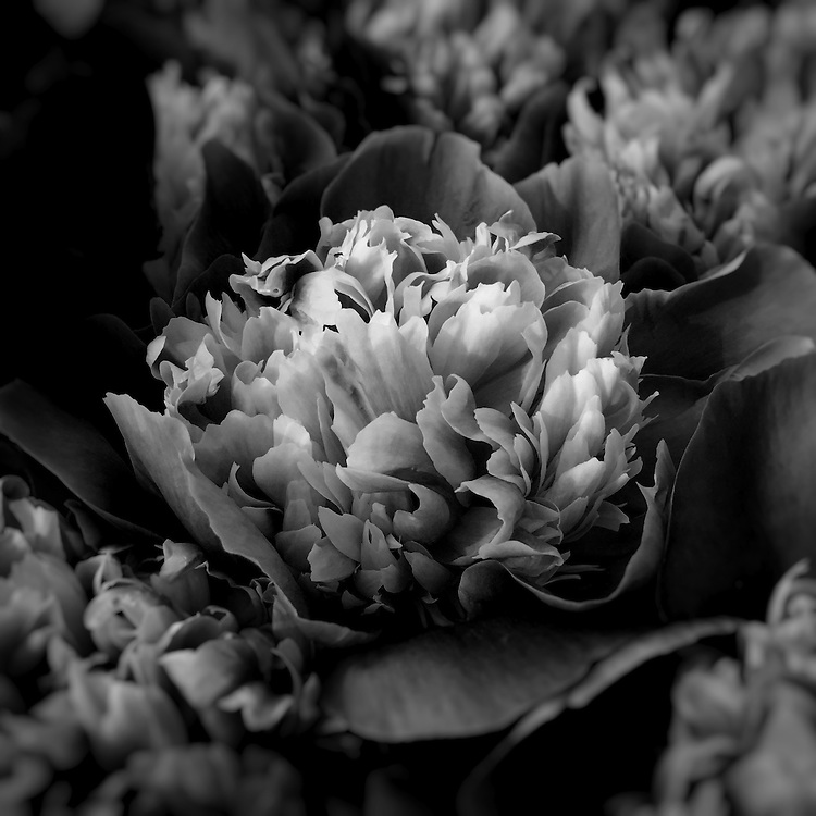 Plant Life is a black and white photo series exploring the everyday beauty that surrounds us. By focusing on nature's intricate shapes and textures, these captures turn each petal into delicate sculpture.<br />