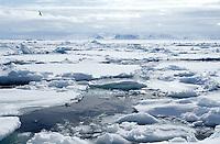 Pack ice<br /> Svalbard<br /> Norway