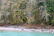 Sauk River and Winter Old Growth Forest, North Cascades National Park