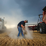 As a storm brews, Rodney Wolgemuth, 22, cleans a combine filter during wheat harvest near Hamer, Idaho. August 15, 2017.
