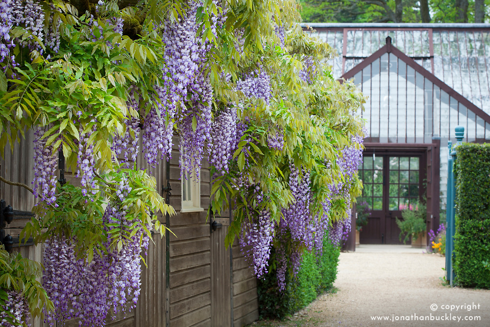 Wisteria and Plant House at Hidcote Manor Garden