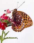 2013_06 Butterfly