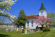 Springtime flowering trees at white frame church in Cape May County, New Jersey