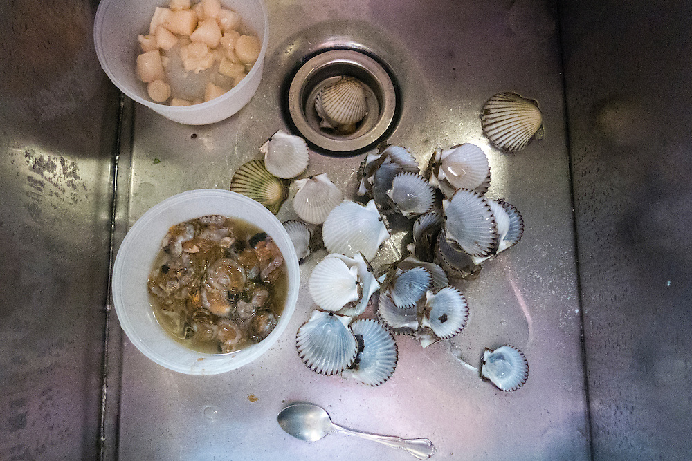 Cleaning scallops is easy once you know how. Tasty right out of the shell or cooked up, they are delicate, sweet and savory at the same time.