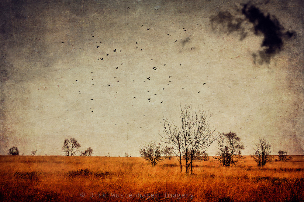 High Fens on a windy November day. Texturized photograph.