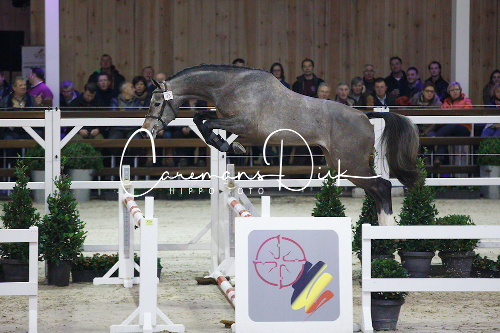 043 - Magic Star van de Eedthoek<br /> Hengstenkeuring BWP - Azelhof - Koningshooikt 2015<br /> ©  Dirk Caremans