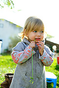 Young blond female toddler of two chewing on a grass blade