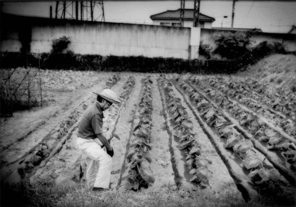Farmer tends to his field of taro, a starch edible root once cooked, set beside a commuter rail line on the now suburban western fringe of Tokyo, Naganuma, Tokyo, Japan.  Because the cost of living in Japan is so high, young people from farming families rarely carry on with the profession, where the average age of farmers hovers around 60 years.