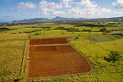 Farm, Kapaa, Kauai, Hawaii