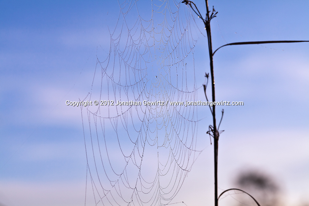A spider web covered by morning dew drops in the Florida Everglades. WATERMARKS WILL NOT APPEAR ON PRINTS OR LICENSED IMAGES.