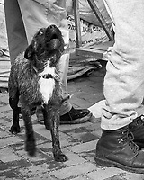 Fisherman's Guard Dog. Street Photography in Cascias. Image taken with a Fuji X-T3 camera and 35 mm f/1.4 lens.
