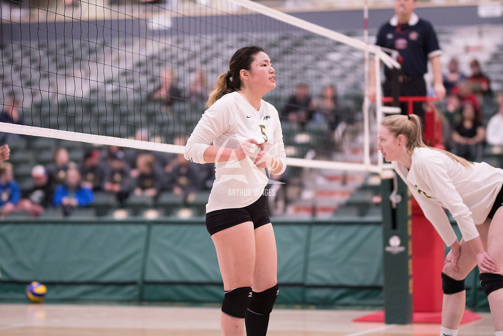 2nd year setter Satomi Togawa (5) of the Regina Cougars in action during Women's Volleyball home game on February 9 at Centre for Kinesiology, Health and Sport. Credit: Arthur Ward/Arthur Images
