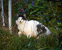 Tuffie the one-eyed cat caught hunting on the wrong side of the street. Backyard summer nature in New Jersey. Image taken with a Leica T camera and 55-135 mm lens (ISO 500, 135 mm, f/5.6, 1/400 sec).