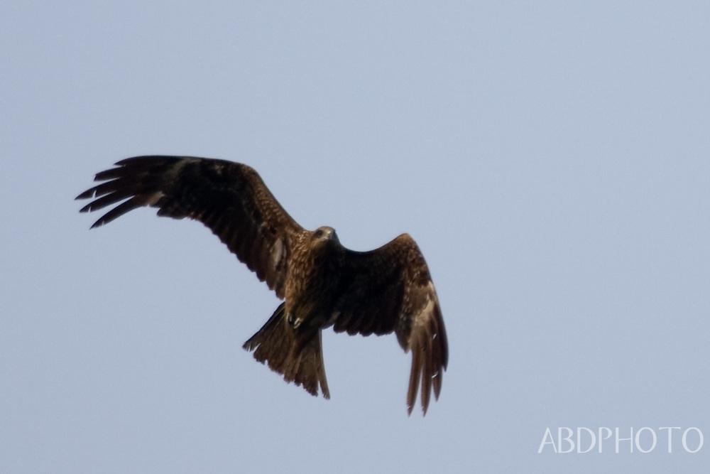 Halong Bay Eagle Vietnam